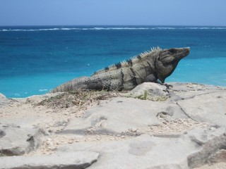 One of the locals on the beach in Tulum, Mexico